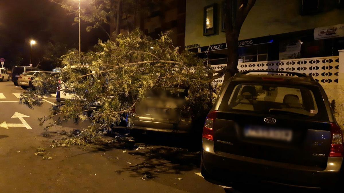 El viento derriba un árbol en Santa Cruz de Tenerife.