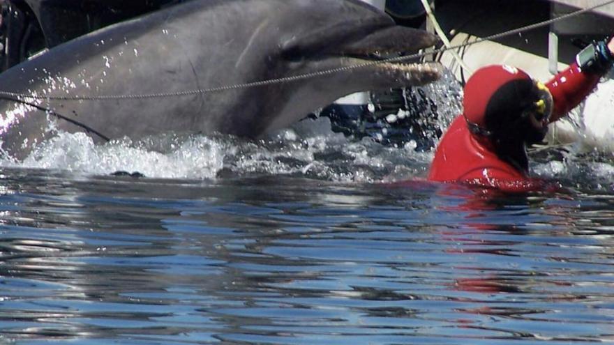 Recuerdos del delfín Gaspar, el amigo que necesita Manoliño