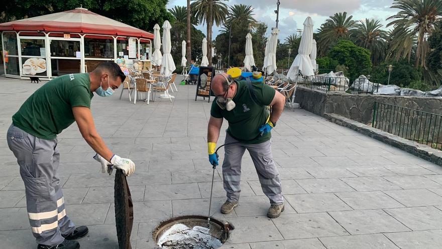 Tratamiento contra las plagas en el entorno del Parque Doramas