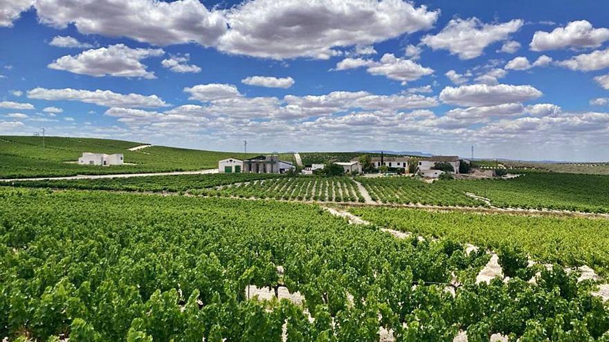 La Junta concede ayudas para casi un millar de viticultores