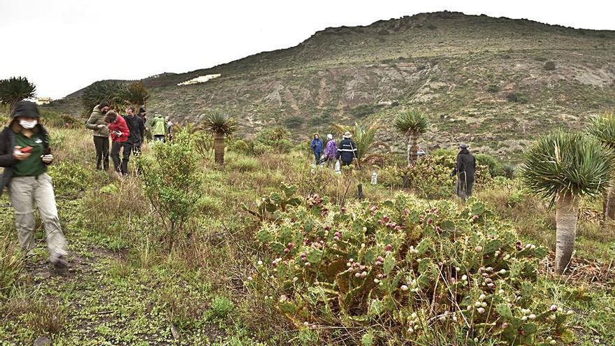 El grupo Montañero planta 50 sabinas en la loma de El Zardo por el 'Día del árbol'