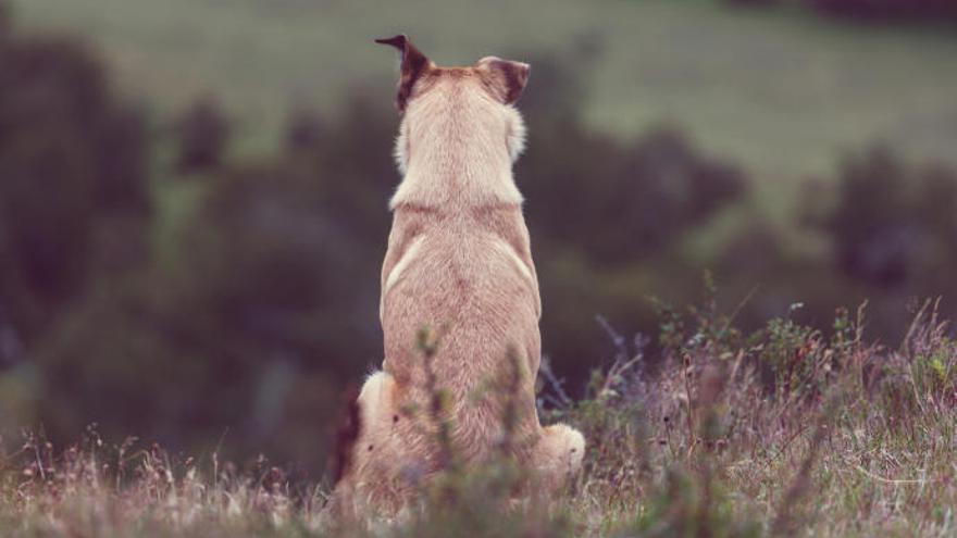 """Los veterinarios piden """"prudencia"""" ante el primer caso de coronavirus en un perro"""