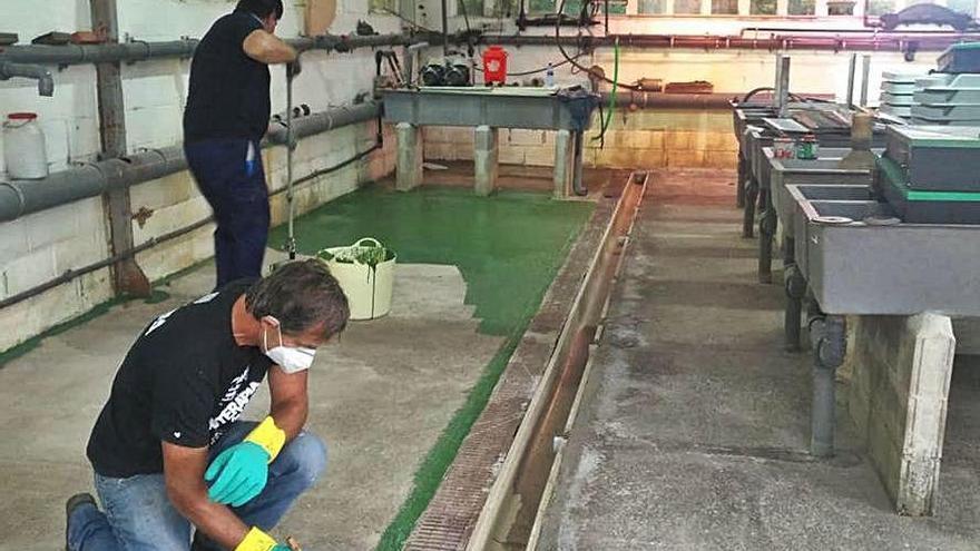 Los pescadores arreglan el centro ictiogénico de Parres