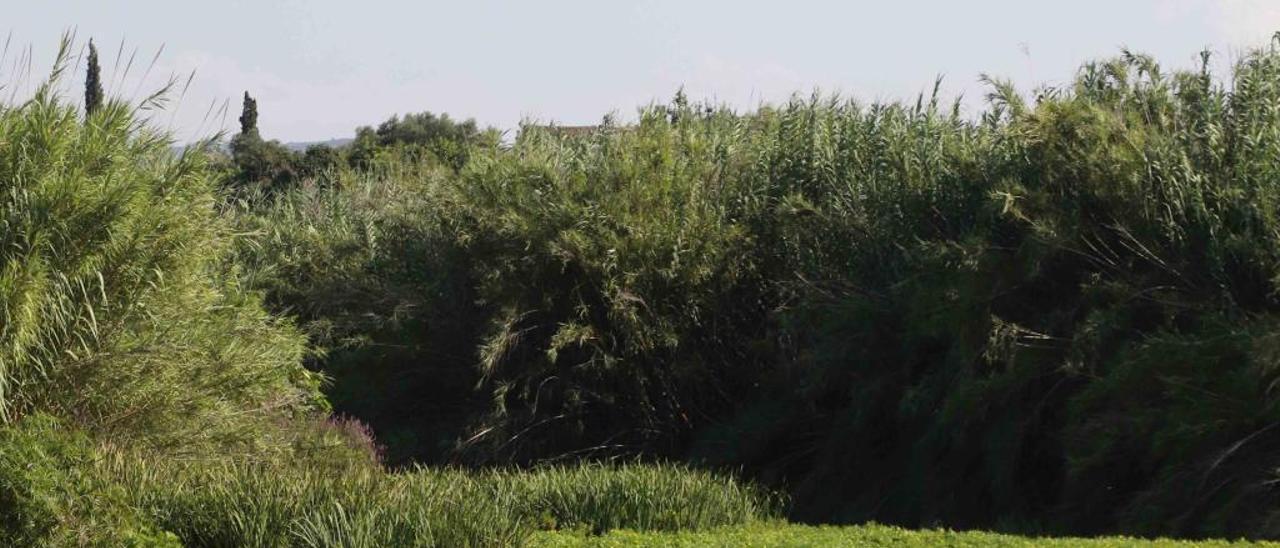 Una vista del río Albaida, a la altura de Manuel, la semana pasada.