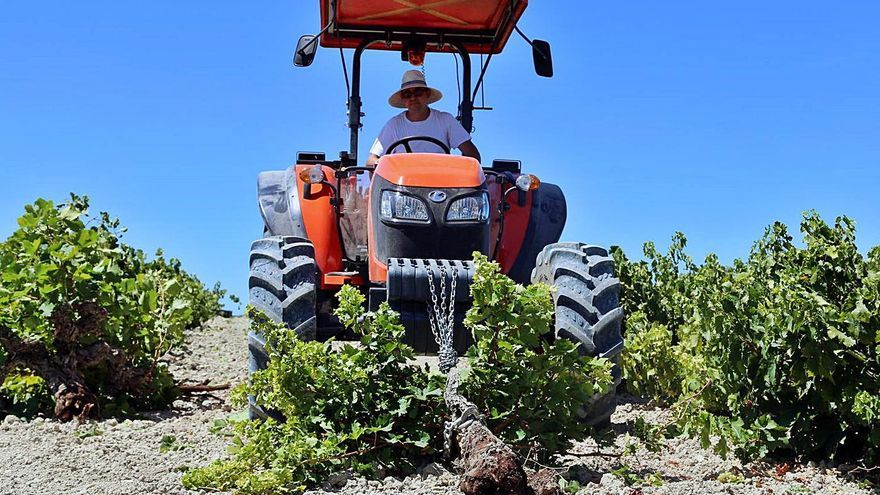 Las ayudas a la reconversión de viñedos rozan los 3,5 millones