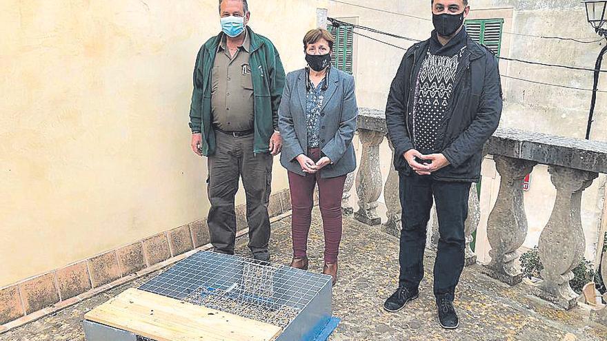 Santanyí colocará jaulas contra la plaga de palomos
