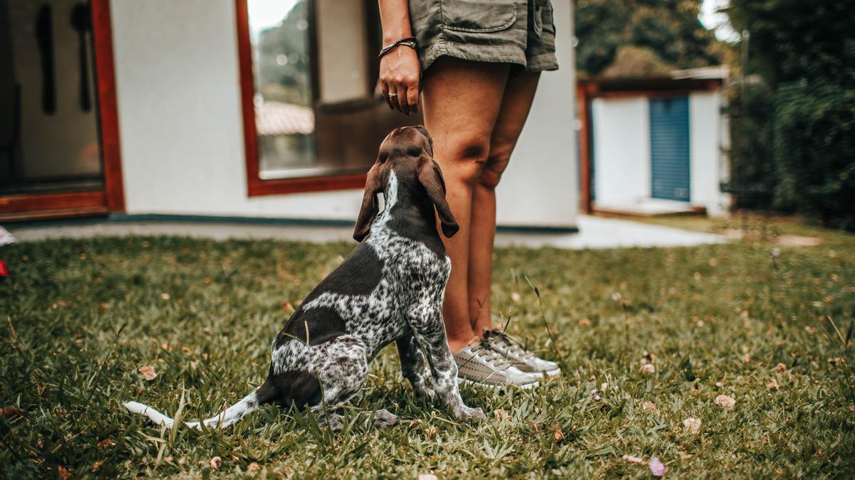 Una mujer, multada por no llevar su perro al veterinario.