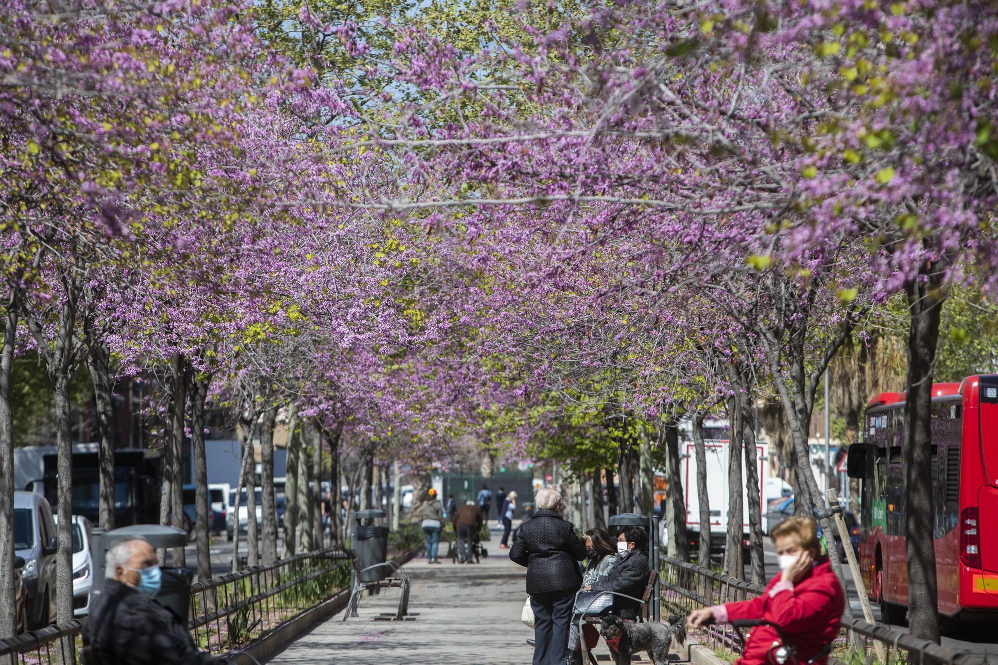 La primavera toma València