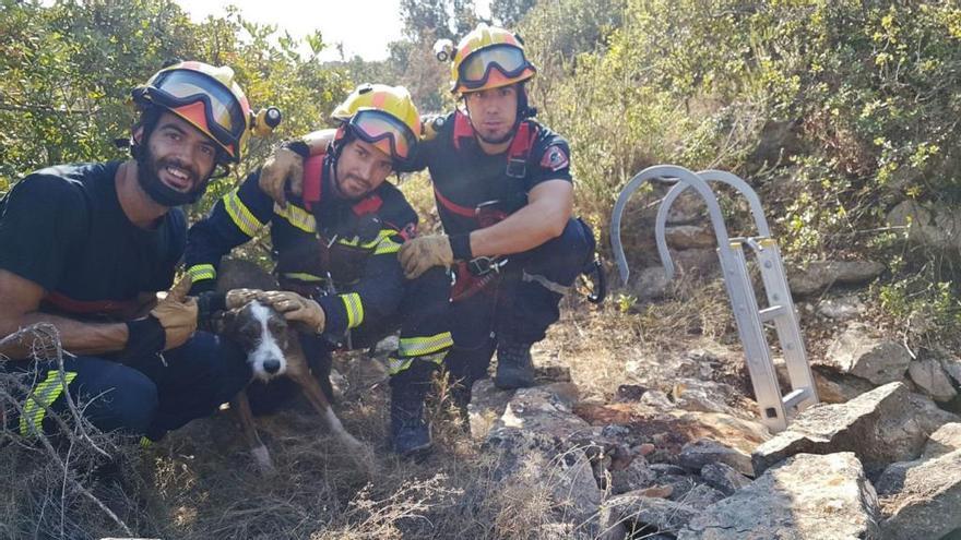 Los bomberos rescatan a un perro atrapado en un aljibe abandonado