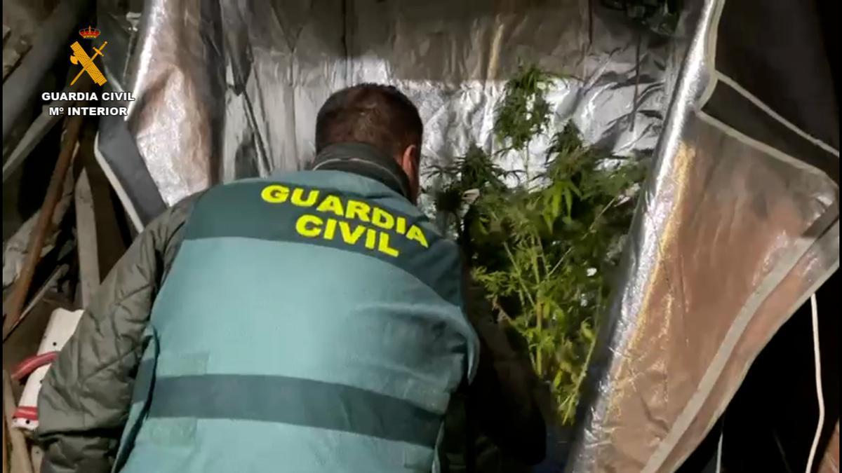 Marihuana confiscada por la Guardia Civil.