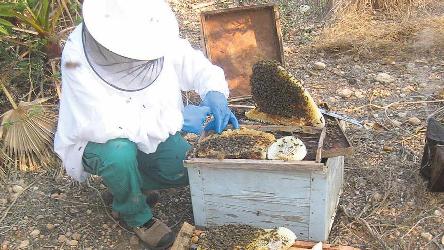 La salut del planeta, en unes abelles
