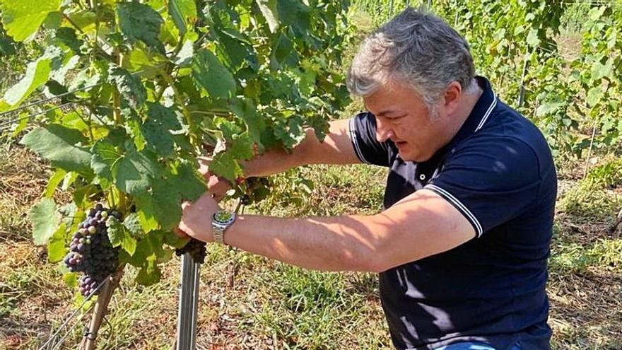 """Lalo Méndez: """"En Asturias la viña es lucha constante"""""""