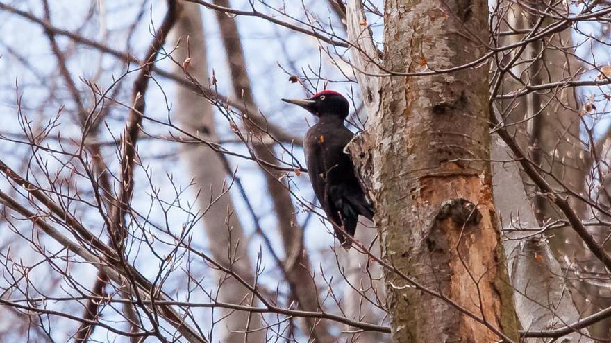 Elaboren una guia a Berga sobre les espècies d'ocells de la serra de Queralt