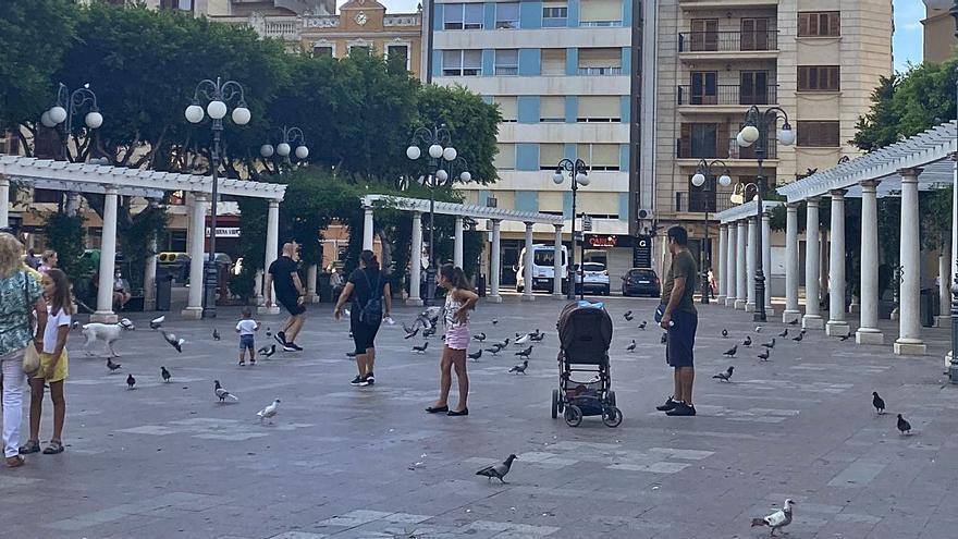 Las palomas invaden la plaza Mayor de Alzira