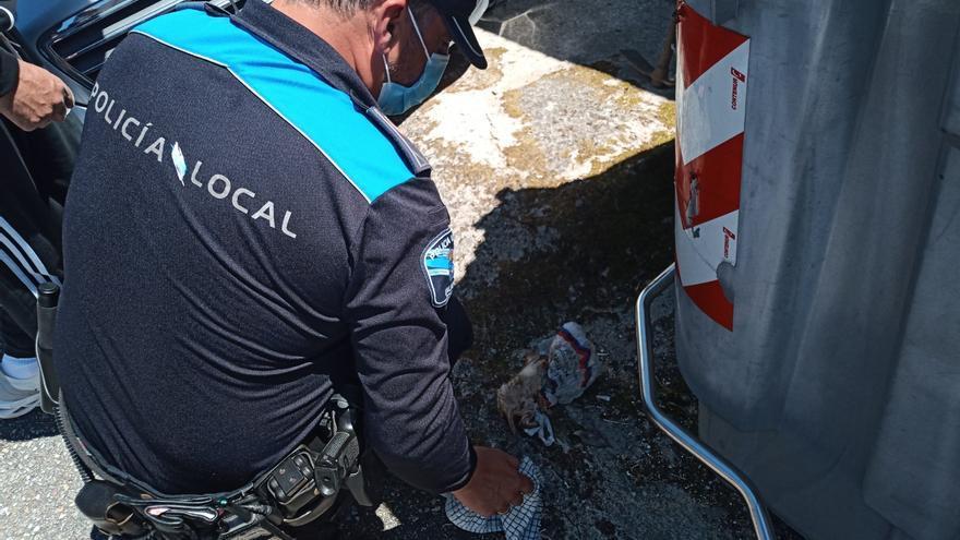 Rescatado un gato en Poio casi asfixiado tras ser abandonado en una bolsa de plástico