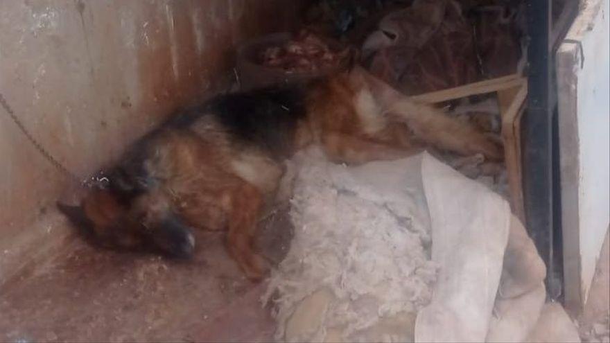 Detenido un joven en Murcia por abandonar a un perro, que ha muerto