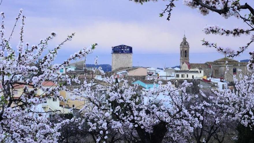Alcalalí, el estallido de la flor del almendro