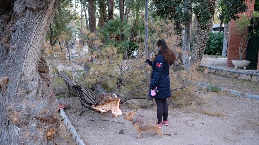 El fuerte viento provoca en Elche la caída de un árbol en el Parque Municipal