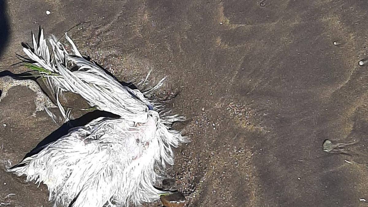 Aparecen restos de santería en Montaña Roja