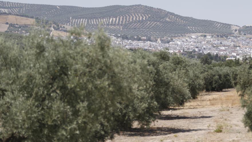 """Las organizaciones agrarias creen que el ministro Planas """"desoye"""" al campo andaluz"""
