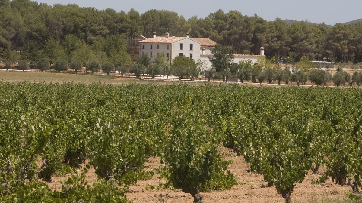 La Comunitat Valenciana dispone de uno de los mejores entornos para el cultivo de viñedos.