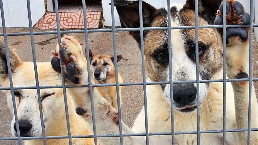 Perros en un refugio de animales. |   // MARTA G. BREA