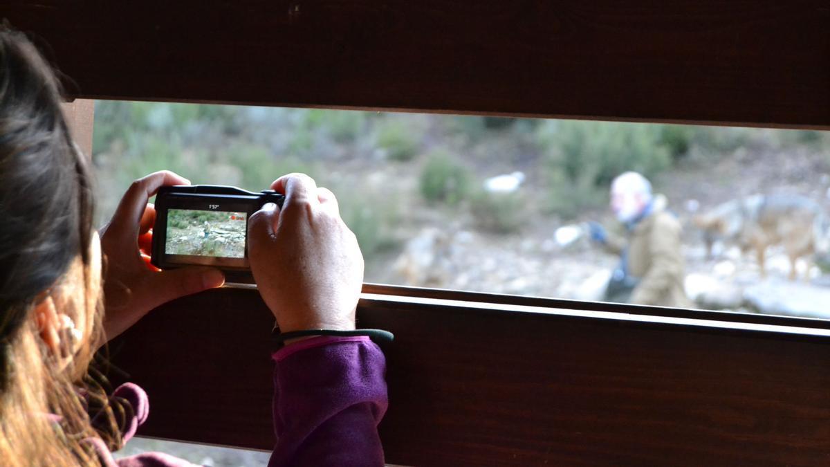 Una persona observa desde el mirador del Centro del Lobo