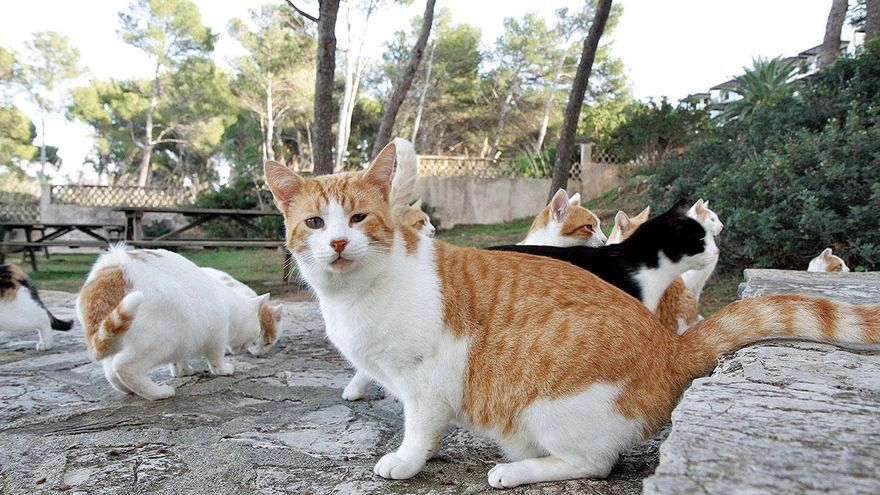 Tierschützer entsetzt über Entwurf für Regelwerk zu Katzenkolonien
