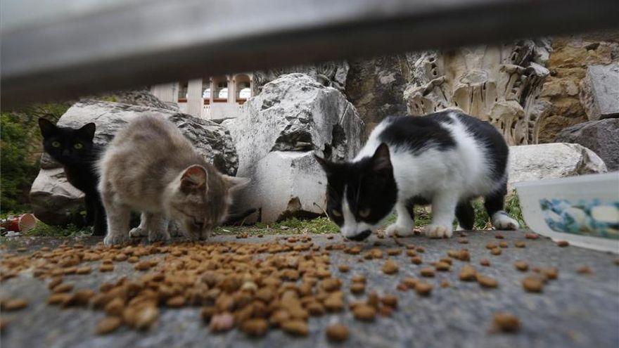 Córdoba destaca por la implantación de microchips y vacunaciones a los gatos callejeros