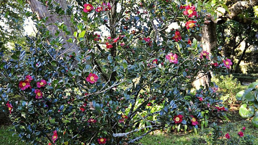 El invierno echa flor en Oca