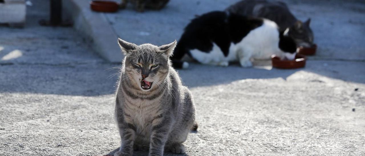 Una colonia de gatos.