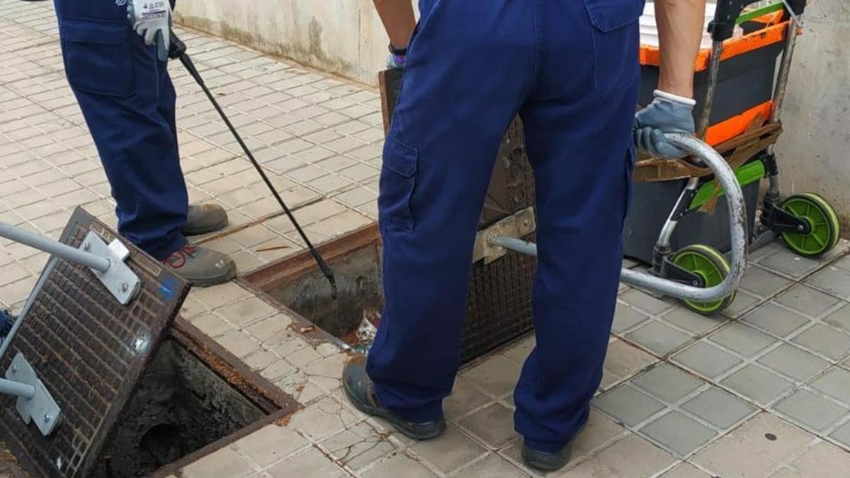 El Ayuntamiento realiza más de medio centenar de controles de plagas en abril en una treintena de barrios de la ciudad.