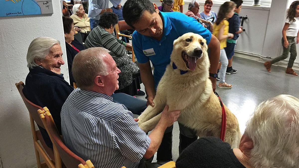 Sesión de terapia canina en la residencia de mayores de la Xunta en Oleiros.  //  | L.O.