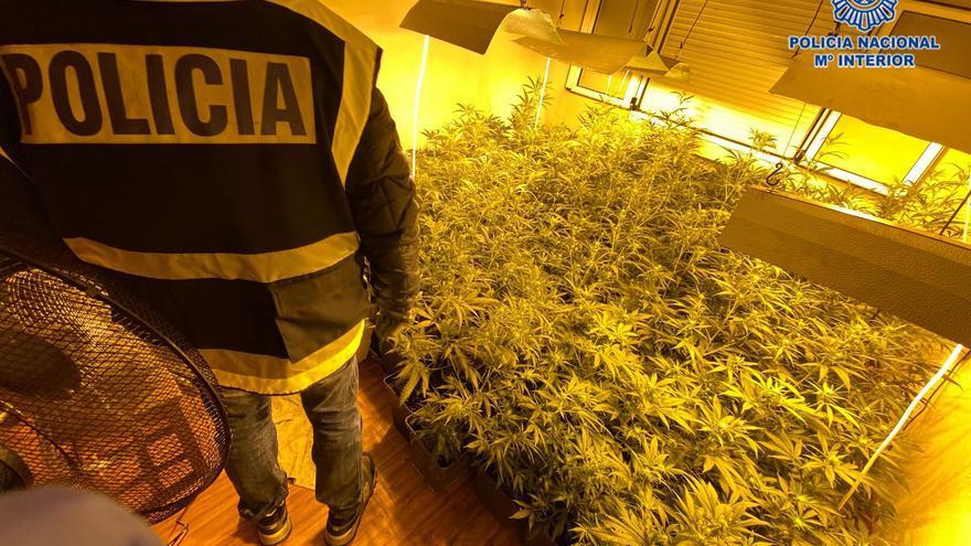 Desmantelan una plantación de marihuana en un piso de Pumarín con más de 140 plantas