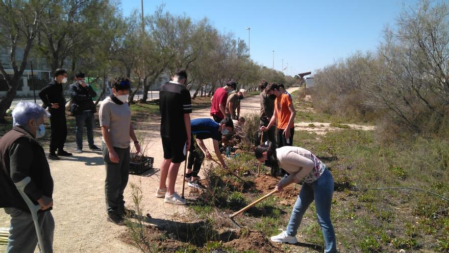 Santa Pola celebra unas jornadas para enseñar a estudiantes la flora de las Salinas y cómo reforestar