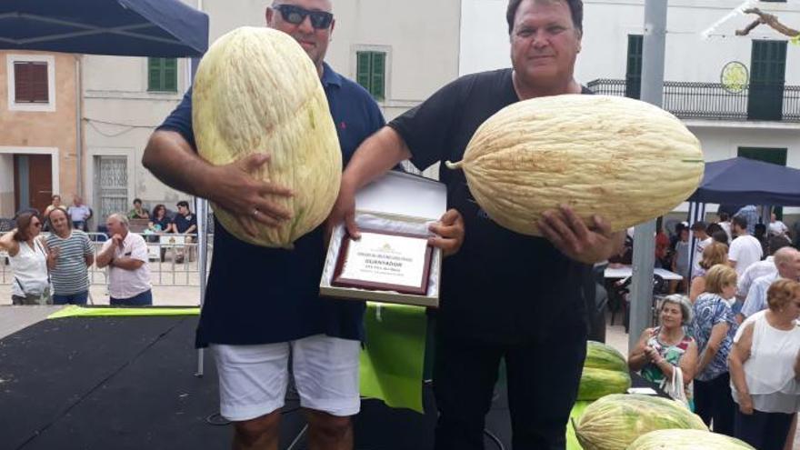 22,5 Kilogramm schwere Melone bricht Rekord in Vilafranca
