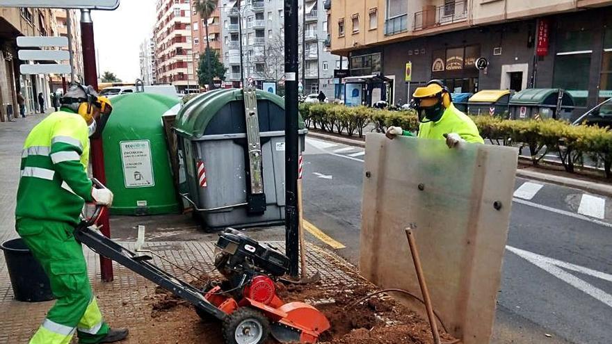 Gandia repone 250 árboles en alcorques que quedaron vacíos