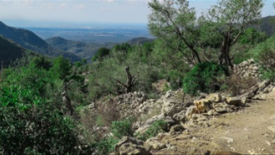 La vall de Coanegra