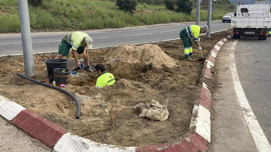 L'Ajuntament de Roses renova 1 km dels rosers de la carretera C-260