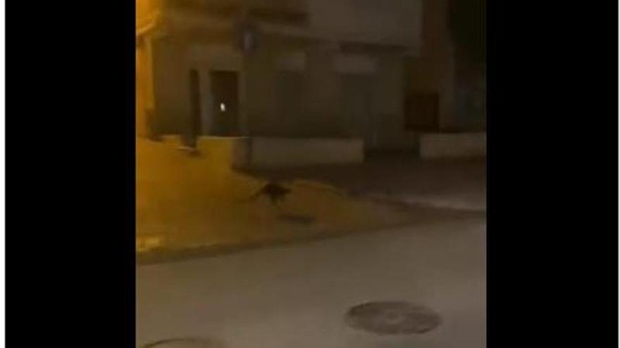 ¿Un canguro en Monteagudo?