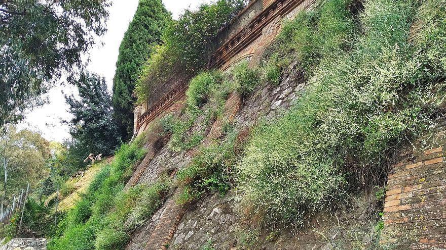El muro florecido de Guerrero Strachan