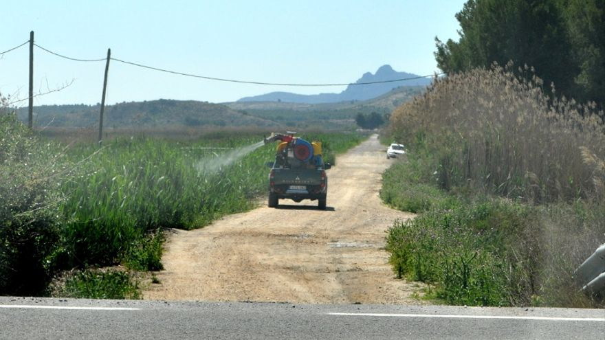 Villena actúa en 20 focos del término para evitar una nueva plaga de mosquitos