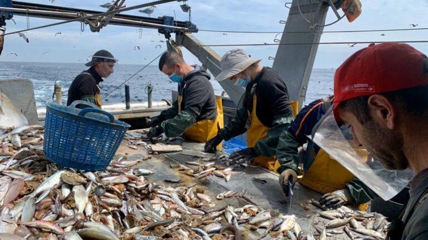 Proyecto para convertir residuos pesqueros en fertilizantes agrícolas