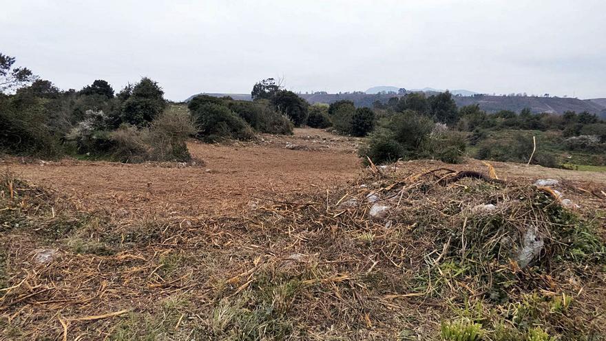 Denuncian la destrucción de hábitats de interés para las aves silvestres en la costa de la comarca