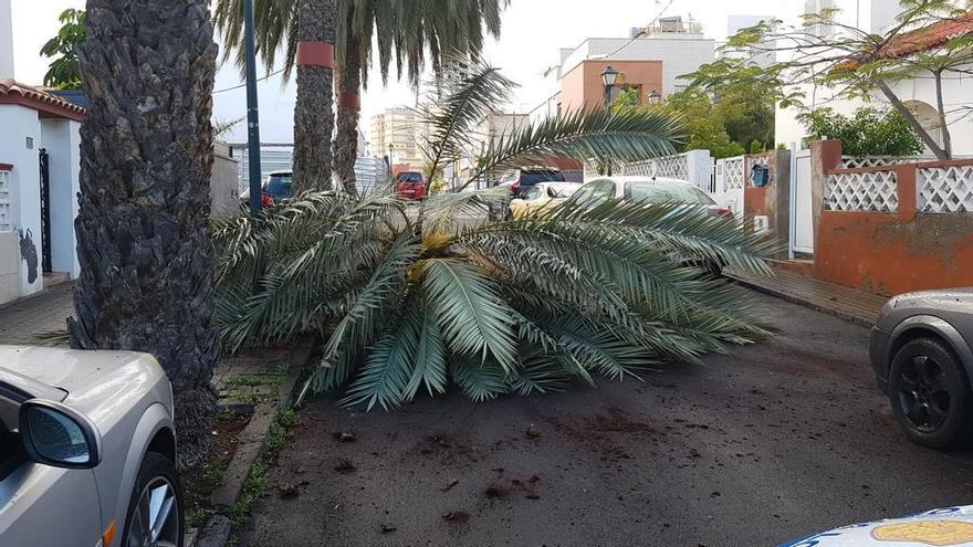 El viento 'tumba' una palmera en Escaleritas