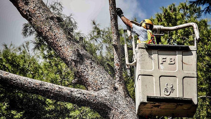 La caída de ramas obliga a revisar todo el arbolado de Elda para evitar accidentes