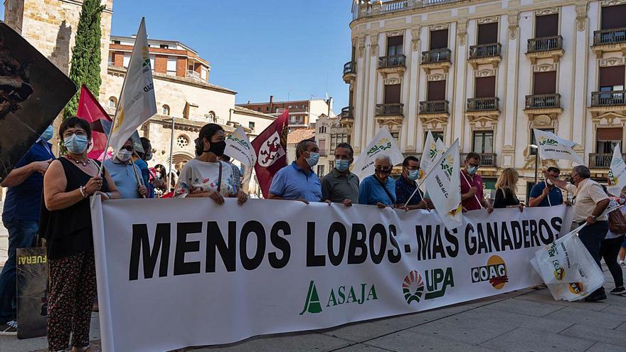 """Zamora: el Consejo de Estado pide información sobre el """"blindaje"""" del lobo"""