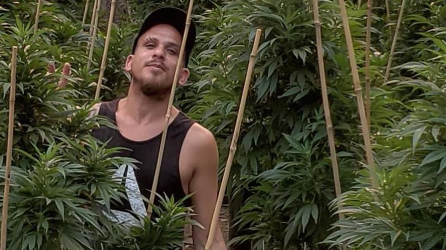 """""""El consumidor ocasional demanda marihuana fuerte"""""""