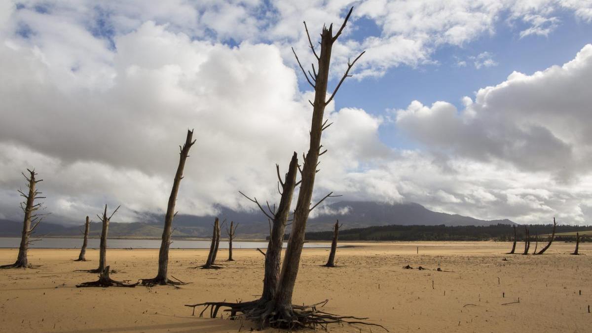 La sequía ha transformado el 70% de ecosistemas.