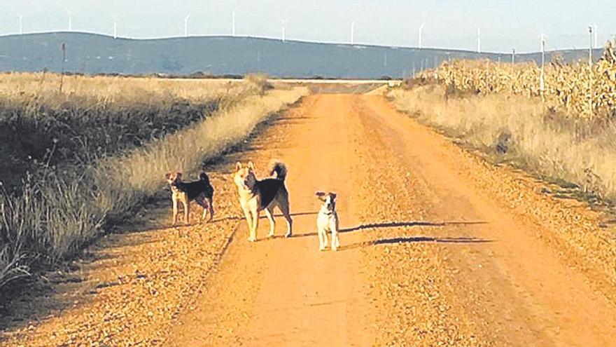 Medio centenar de hectáreas para la caza y pastos en Pozuelo de Tábara por solo 1.500 euros